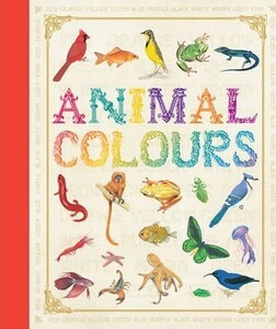First Concept: Animal Colours